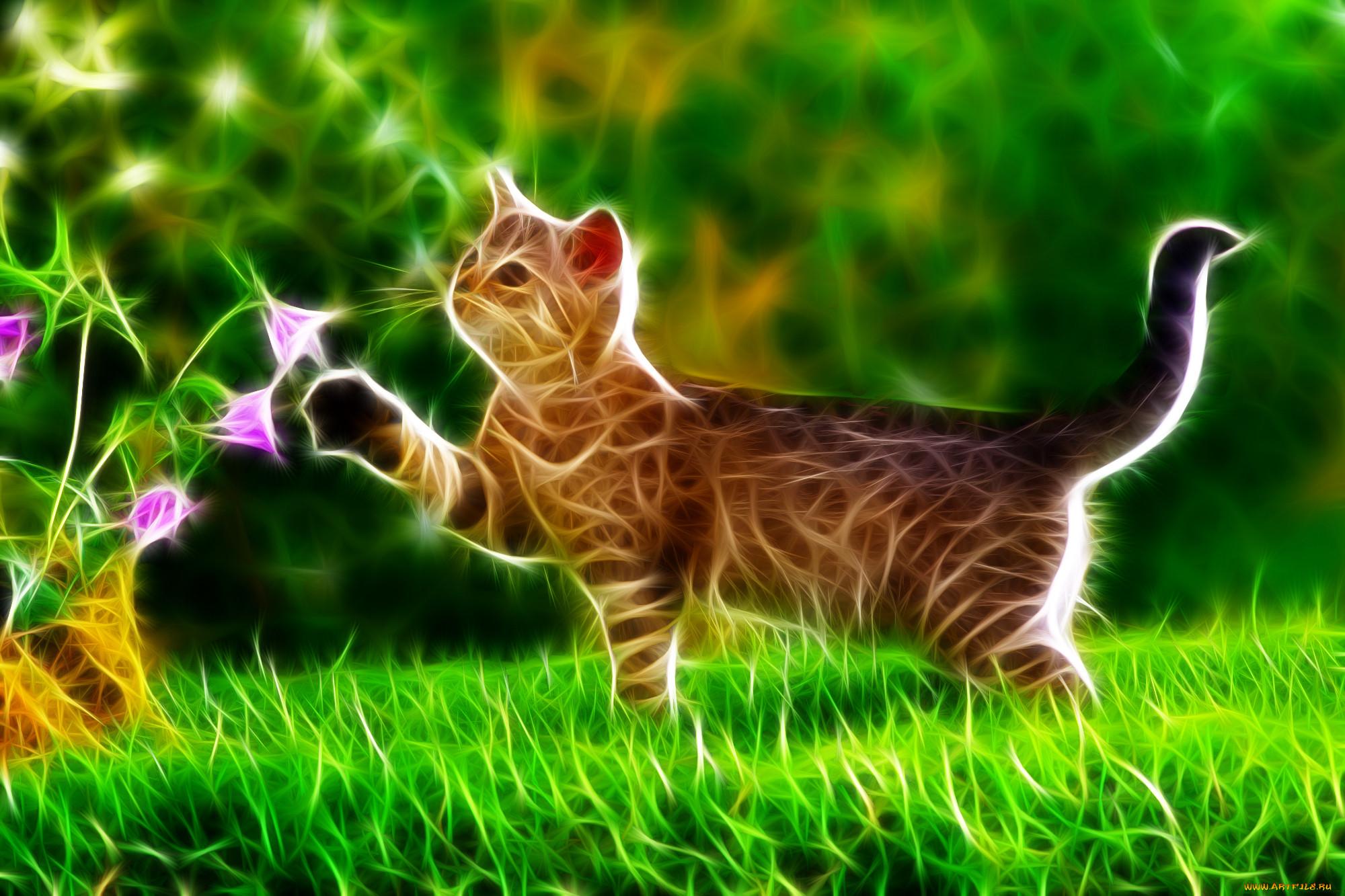 картинки на телефон красивые живые обои котята эти настойки выглядят